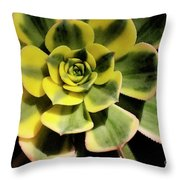 Variegated Succulent Throw Pillow