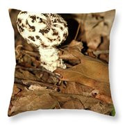 Varigated Mushroom Throw Pillow