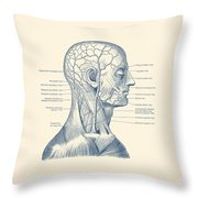 Vascular And Muscular System - Vintage Anatomy Print Throw Pillow