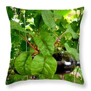 Vegetable Growing In Used Water Bottle 10 Throw Pillow