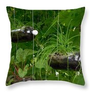 Vegetable Growing In Used Water Bottle 3 Throw Pillow