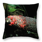 Vegetable Not Animal  Throw Pillow