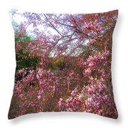 Vekol Wash Desert Ironwood In Bloom Throw Pillow