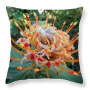 Veldfire Protea Throw Pillow