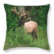 Velvet Never Looked So Good Throw Pillow