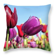 Velvet Red And Purple Tulip Flowers Closeup Throw Pillow