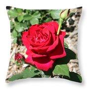 Velvet Red Rose Throw Pillow