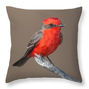 Vermilion Flycatcher Throw Pillow by Clarence Holmes