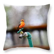 Vermilion Flycatcher Two Throw Pillow