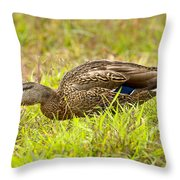 Vermont Mallard Portrait Throw Pillow