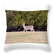 Vermont White-tailed Deer  Throw Pillow