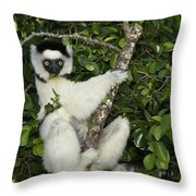 Verreaux's Sifaka Throw Pillow