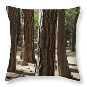 Vertical Of A Stand Of Ponderosa Pine Throw Pillow