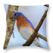 Very Bright Young Eastern Bluebird Perched On A Branch Colorful Throw Pillow