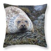 Very Chubby Harbor Seal Throw Pillow