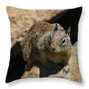Very Cute Face Of A Wild Squirrel In California Throw Pillow
