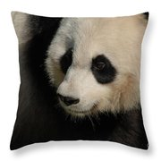 Very Fluffy Furry Face Of A Giant Panda Throw Pillow