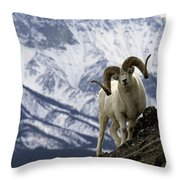 Very Large Dall Sheep Ram On The Grassy Throw Pillow
