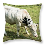 Very Muscled Cow In Green Field Throw Pillow