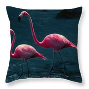 Very Pink Flamingos Throw Pillow