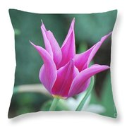 Very Pretty Blooming Pink Spikey Tulip Flower Blossom Throw Pillow