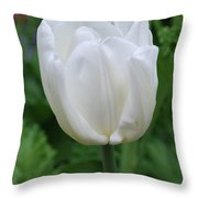 Very Pretty Blooming White Tulip In A Garden Throw Pillow