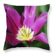 Very Pretty Dark Pink Blooming Tulip With Yellow In The Center Throw Pillow