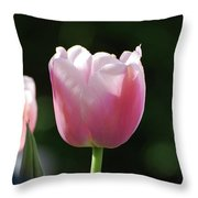 Very Pretty Pale Pink Tulip Blossom In Spring Throw Pillow
