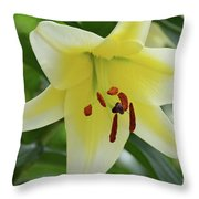 Very Pretty Single Blooming Yellow Daylily Flower Throw Pillow