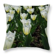 Very Pretty Spring Garden With Flowering White Tulips Throw Pillow