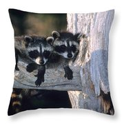 Very Young Raccoons Throw Pillow