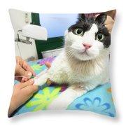 Veterinarian Cat Care Throw Pillow