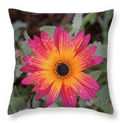 Vibrant African Daisy Throw Pillow