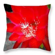Vibrant Cacti Throw Pillow
