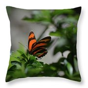 Vibrant Colors To A Orange Oak Tiger Butterfly Throw Pillow