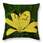 Vibrant Yellow Lily Thriving In The Spring Throw Pillow