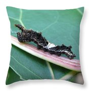 Viceroy Caterpillar Throw Pillow