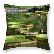 Victoria Amazonica Giant Lily Pads  Throw Pillow