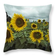 View Of A Field Of Sunflowers Throw Pillow