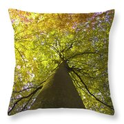 View To The Top Of Beech Tree Throw Pillow