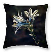 Vignetted Ajo Lily Throw Pillow
