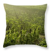 Vineyards Shrouded In Fog Throw Pillow