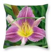 Violet Day Lily Throw Pillow