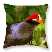 Violet Plantain Eater Throw Pillow