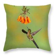 Violet-tailed Sylph Hummingbird Throw Pillow
