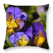 Violets 15-01 Throw Pillow