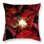 Virginia Creeper Sunburst 2 Throw Pillow