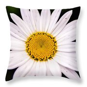 Virginia Daisy Throw Pillow