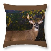 Virginian White Tail Buck Throw Pillow