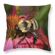 Visitor Up Close Coneflower  Throw Pillow
